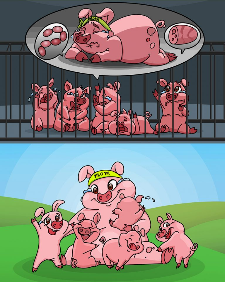 Baby Pigs Crying For Their Mother - Pig Character Design 2D Vector Illustration